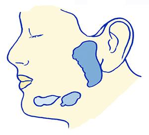 glandes-salivaires